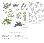 D90.11A Soft line drawings (A4) – herbs