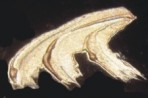 R181 Y181 Ultra Bronze Metallic