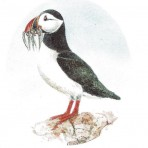 XD7 Sheet of Puffins (12 images) 30mm x 50mm