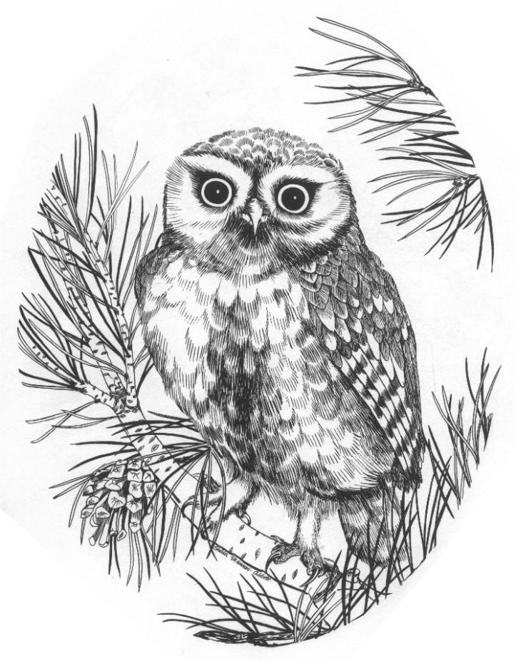D27 Owl   sepia outlin...