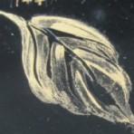 D30.144 Colour sheet A4 – Satin gold