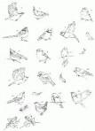 D90.7 Soft line drawings (A4) – little birds