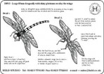 D89.3 85mm dragonfly project decal set