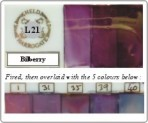L21 Bilberry
