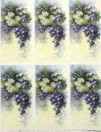 PH220 Grapes – A4