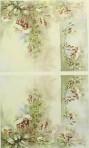 PH234 Fuchsias – A4