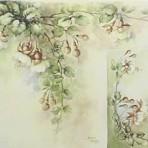 SA26 Fuchsias