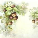 SA31 Strawberries