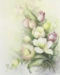 SA60 Tulips