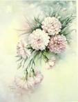 SA66 Carnations