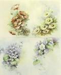 SA67 Violets, primrose,daisy,poppy