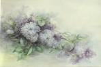 SA85 Lilac
